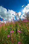 Wildflowers beneath a bright summer's sky