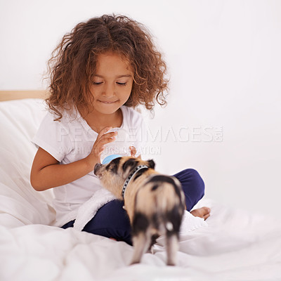 Buy stock photo A cute little girl sitting on her bed and feeding her pet piglet