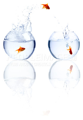 Buy stock photo High resolution image of a goldfish leaping out of one bowl of water into another, isolated on white - copyspace