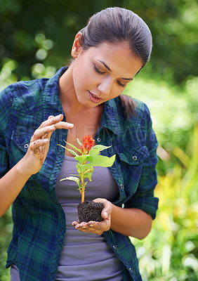 Buy stock photo Shot of an attractive young woman preparing a new plant for the garden