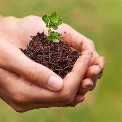 Buy stock photo Cropped shot of a young woman's hands holding a seedling