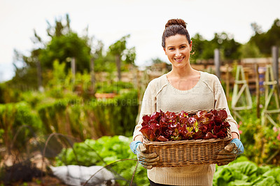 Buy stock photo Portrait of a smiling woman holding a basket of lettuce while standing in her organic garden