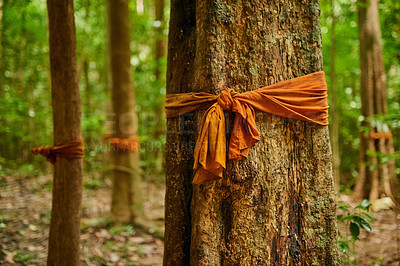 Buy stock photo Shot a forest of trees with orange fabric tied around their trunks