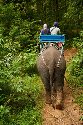 Buy stock photo Rearview shot of an elephant with a group of tourists riding on its back