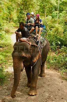 Buy stock photo Shot of an elephant with a group of tourists riding on its back