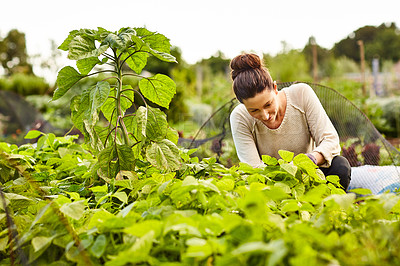 Buy stock photo Shot of a smiling woman examining plants in her organic garden