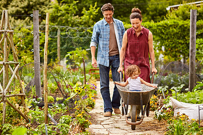 Buy stock photo Shot of a smiling mother and father pushing their little girl through their organic garden in a wheelbarrow