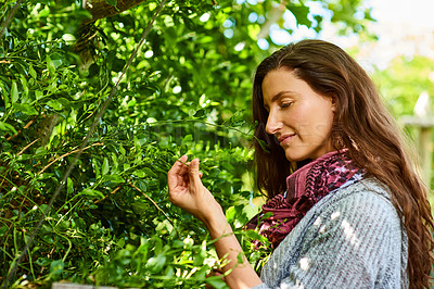 Buy stock photo Shot of a smiling mature woman standing in her organic garden