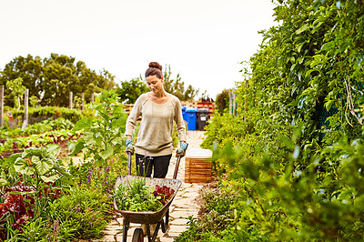 Buy stock photo Shot of a woman pushing a wheelbarrow through her organic garden