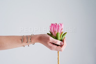 Buy stock photo Studio shot of an unrecognizable woman holding a flower against a grey background