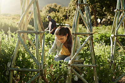 Buy stock photo Shot of a young woman working in a garden