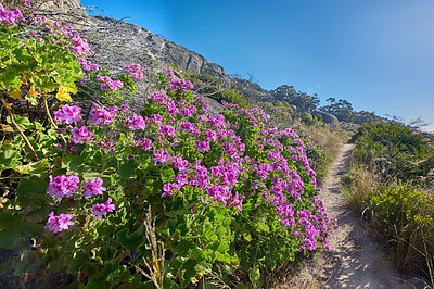 Buy stock photo Walking the trails of Table Mountain National Park, Cape Town, South Africa.