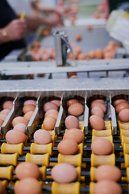 Buy stock photo Shot of chicken eggs moving up a conveyer belt while unrecognisable factory workers work in the background