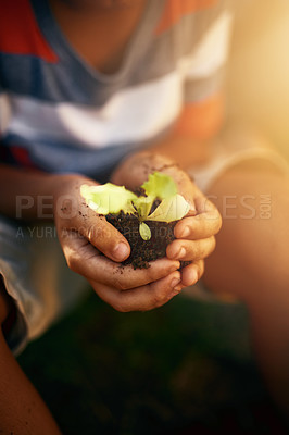 Buy stock photo Closeup shot of an unidentifiable little boy holding a plant growing in soil
