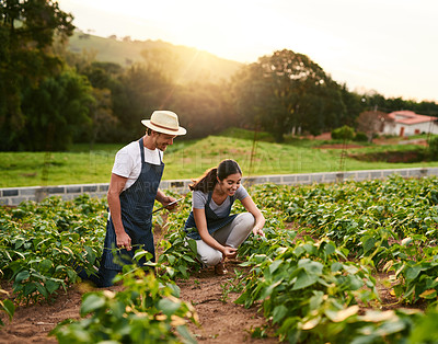 Buy stock photo Shot of an affectionate young couple working together on their private farm