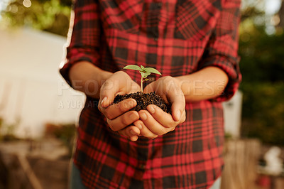 Buy stock photo Cropped shot of an unrecognizable young woman busy with her plants in the garden