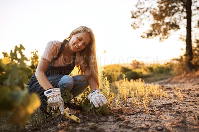 Buy stock photo Shot of a young woman tending to the crops on a farm