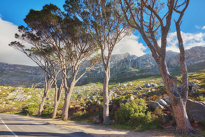 Buy stock photo Table Mountain National Park, Cape Town, South Africa