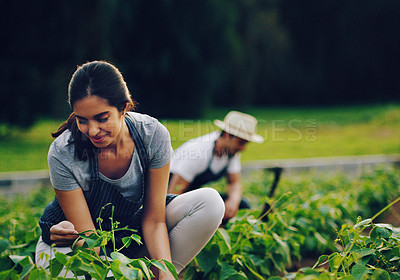 Buy stock photo Shot of a young woman working in a garden with her husband in the background