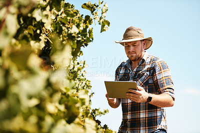 Buy stock photo Shot of a farmer using a digital tablet working in a vineyard
