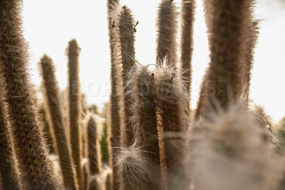 Buy stock photo Shot of a cactus in a desert