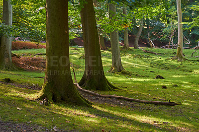 Buy stock photo Hardwood forest uncultivated - Denmark