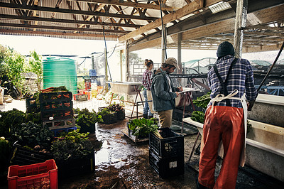 Buy stock photo Shot of a team of young people rinsing off freshly picked vegetables on a farm