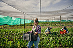 The organic farming industry is taking off