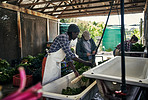 The less pesticides the better the produce