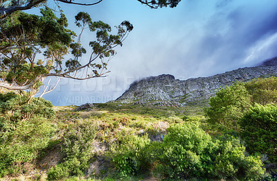 Buy stock photo Images of the nature of Table Mountain - Cape Town, Western CapeImages of the nature of Table Mountain - Cape Town, Western Cape