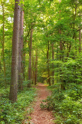 Buy stock photo Hardwood forest uncultivated - DenmarkA photo of green and lush forest in springtime