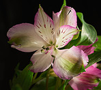 Beautiful flower - dark background