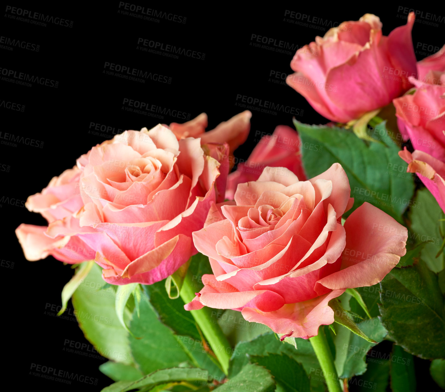 Buy stock photo A bouquet of red roses on against black background