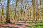 Forest and trees in very early spring - Denmark
