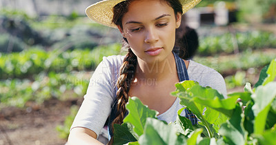 Buy stock photo Cropped shot of an attractive young female farmer checking on her crops on the farm