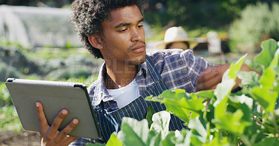 Buy stock photo Cropped shot of a handsome young male farmer using a tablet while checking on crops on the farm with his wife in the background