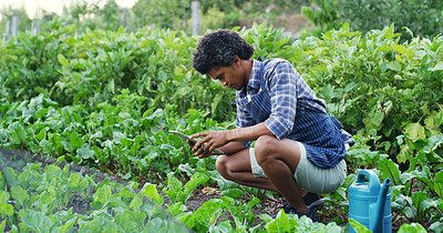 Buy stock photo Shot of a handsome young male farmer using a tablet while checking on his crops on the farm