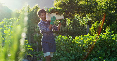 Buy stock photo Cropped shot of a handsome young male farmer carrying a crate of vegetables while working on his farm
