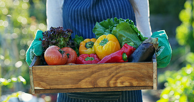 Buy stock photo Cropped shot of an unrecognizable female farmer carrying a crate of vegetables while working on her farm