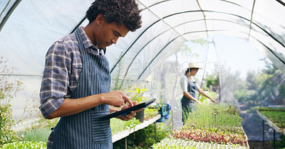 Buy stock photo Cropped shot of a handsome young male farmer using a tablet while working in a greenhouse on the farm with his wife in the background