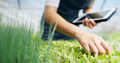 Buy stock photo Cropped shot of an unrecognizable female farmer using a tablet while working in a greenhouse on her farm