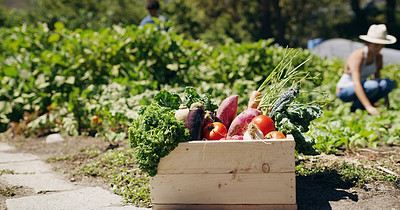 Buy stock photo Shot of a crate of vegetables on a farm with a female farmer in the background