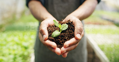 Buy stock photo Cropped shot of an unrecognizable male farmer holding a budding plant in soil while working on his farm