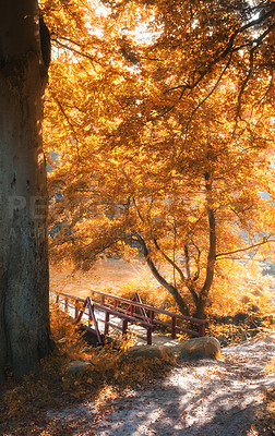 Buy stock photo Small bridge in Autumn - natural background