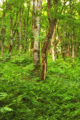 Buy stock photo A photo of green and lush forest in springtime