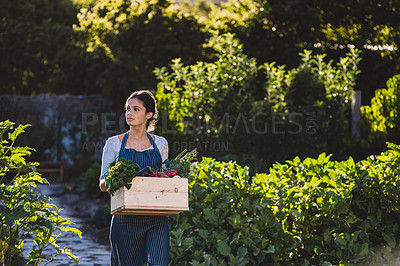Buy stock photo Shot of a young woman carrying a crate of vegetables in a garden