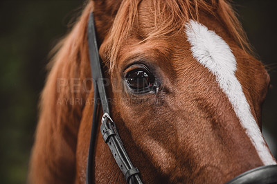 Buy stock photo Cropped shot of a beautiful horse out in nature