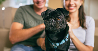 Buy stock photo Cropped shot of an adorable dog at home with his human family