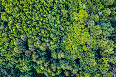 Buy stock photo High angle shot of a beautiful green and lush forest