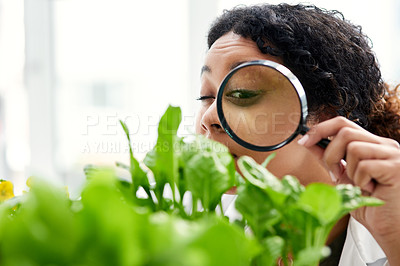Buy stock photo Cropped shot of a female scientist looking at a plant through a magnifying glass
